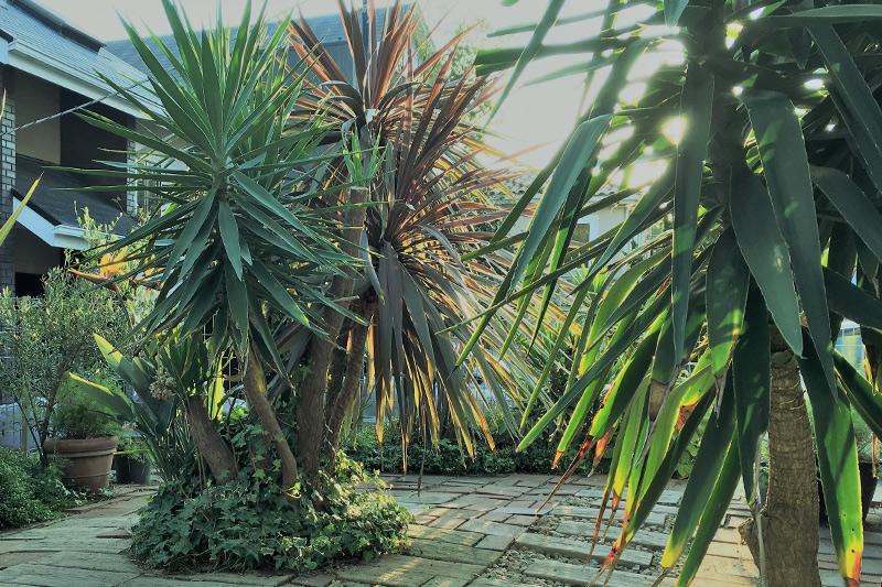 オススメの南国風のお庭